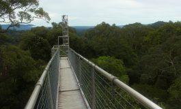 Parki narodowe Labu Forest i Ulu Temburong