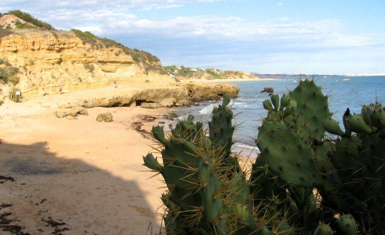 Albufeira – słońce, ocean, skały