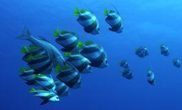 OCEANICZNE KRÓLESTWO