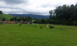 Wyprawa rowerowa do Szwajcarii - dzień 9