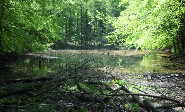 Tajemnicze Jeziorka Duszatyńskie